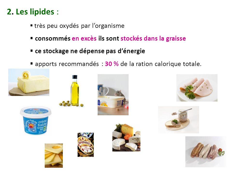 2. Les lipides : consommés en excès ils sont stockés dans la graisse