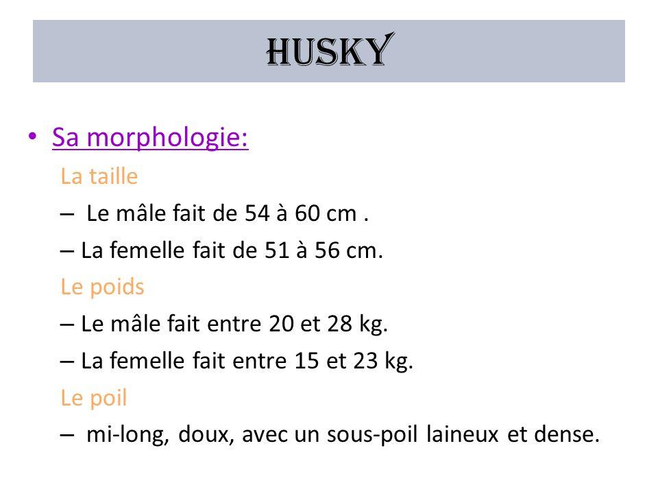 Husky Sa morphologie: La taille Le mâle fait de 54 à 60 cm .