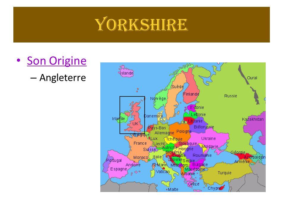 Yorkshire Son Origine Angleterre