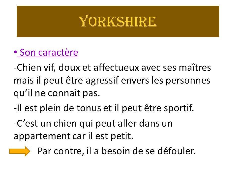 Yorkshire Son caractère