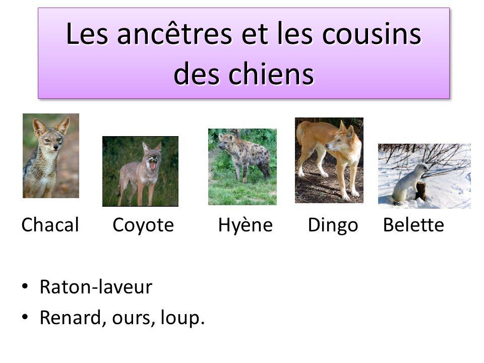 Les ancêtres et les cousins