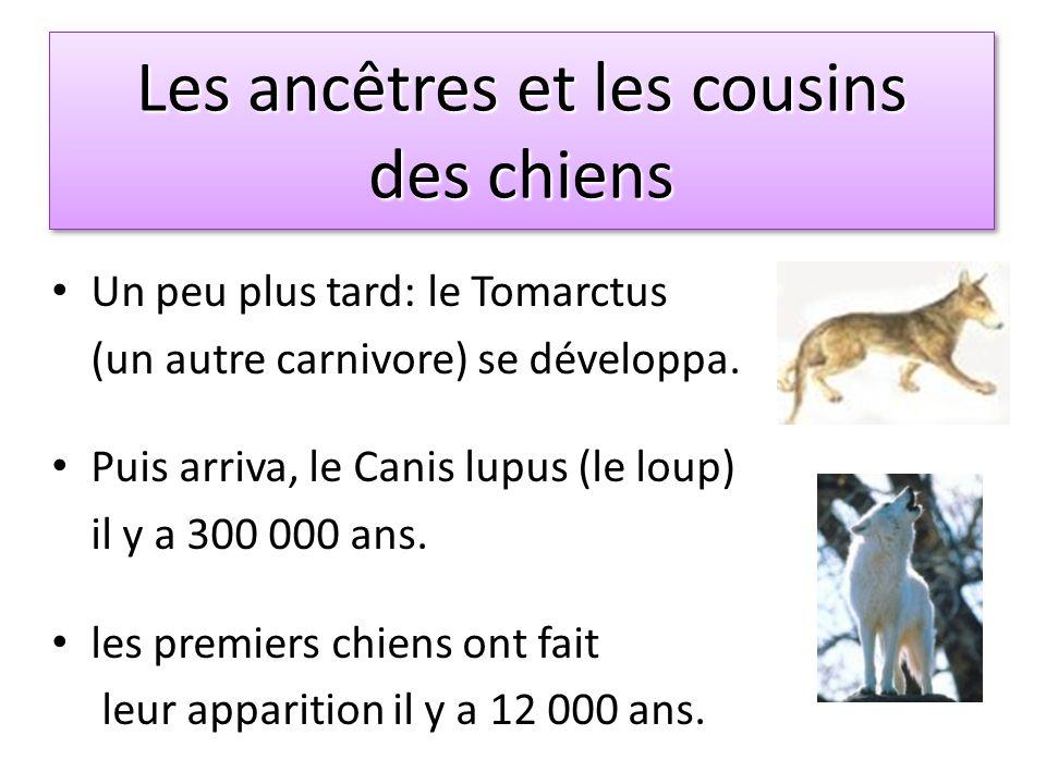 Les ancêtres et les cousins des chiens