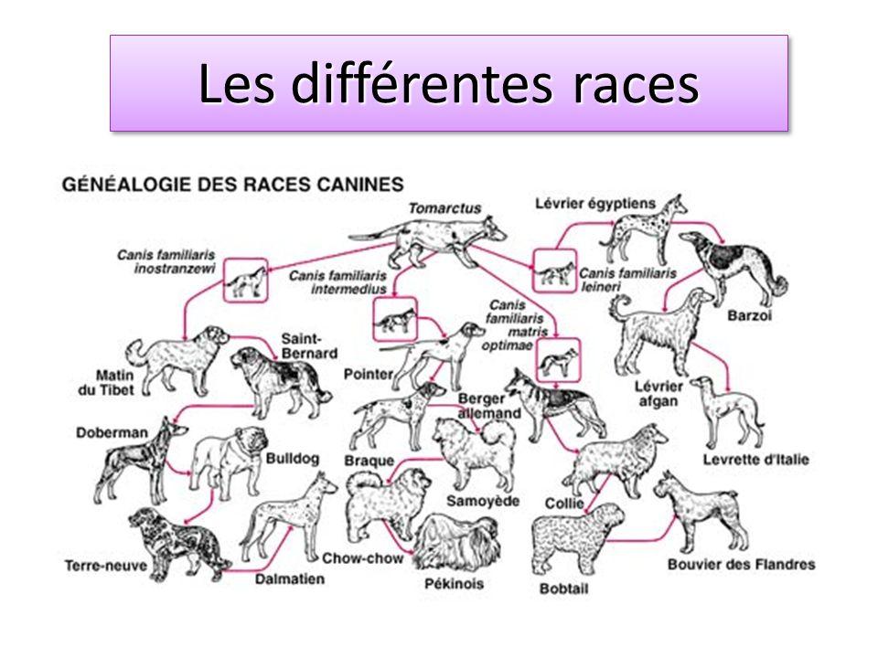 Les races Les différentes races