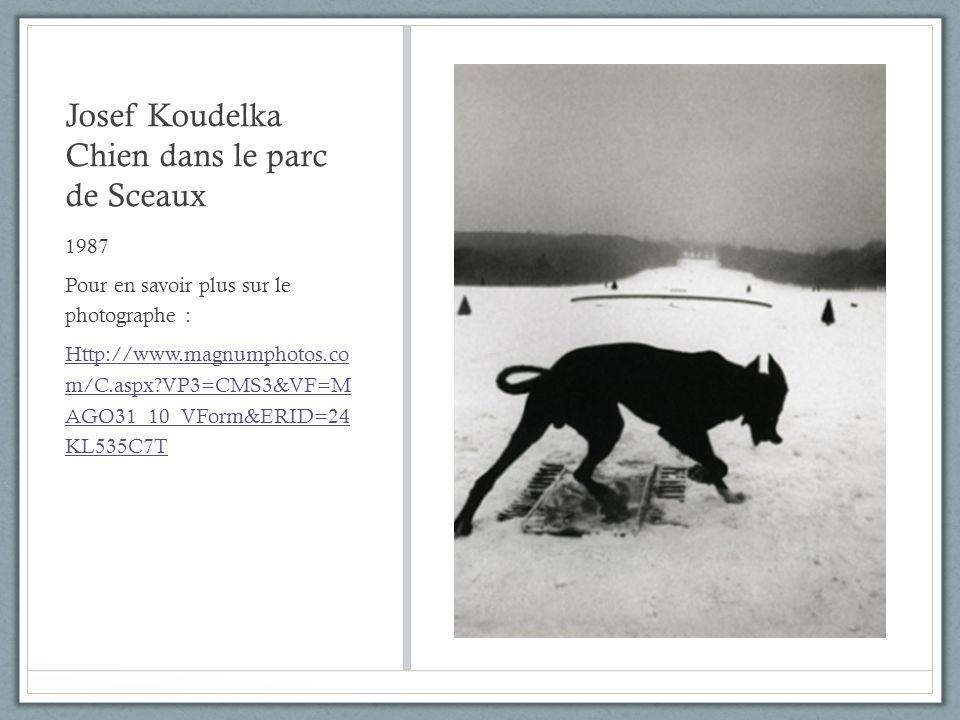 Josef Koudelka Chien dans le parc de Sceaux