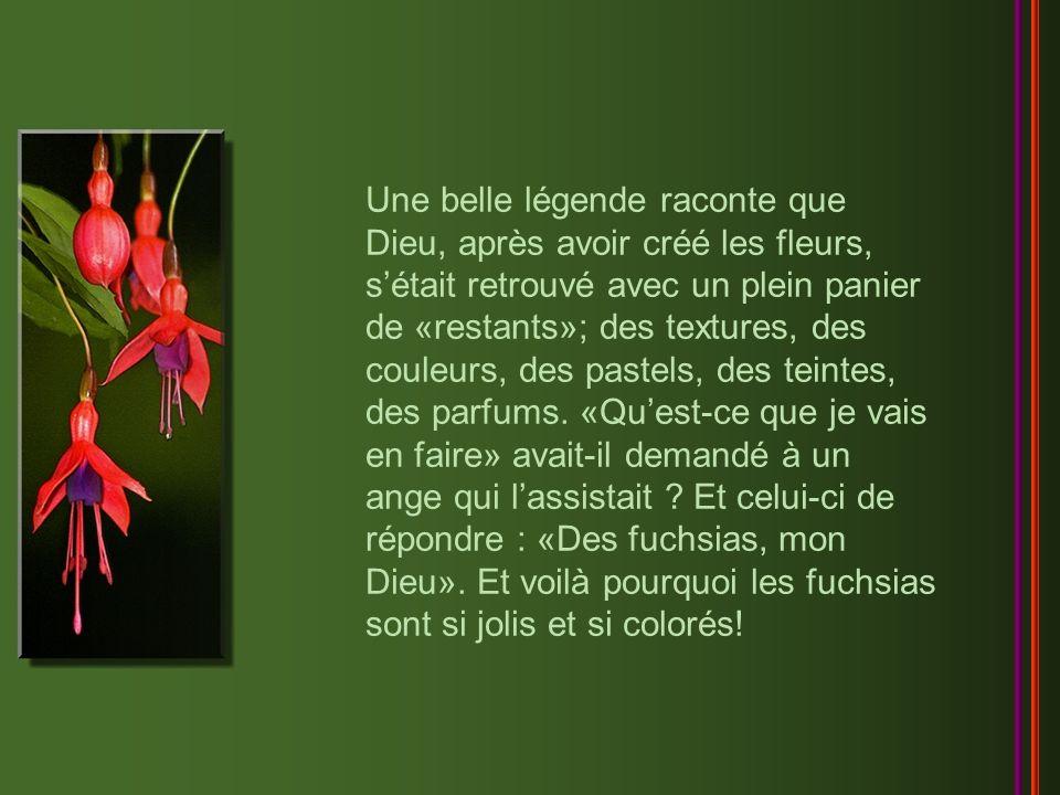 Une belle légende raconte que Dieu, après avoir créé les fleurs, s'était retrouvé avec un plein panier de «restants»; des textures, des couleurs, des pastels, des teintes, des parfums.