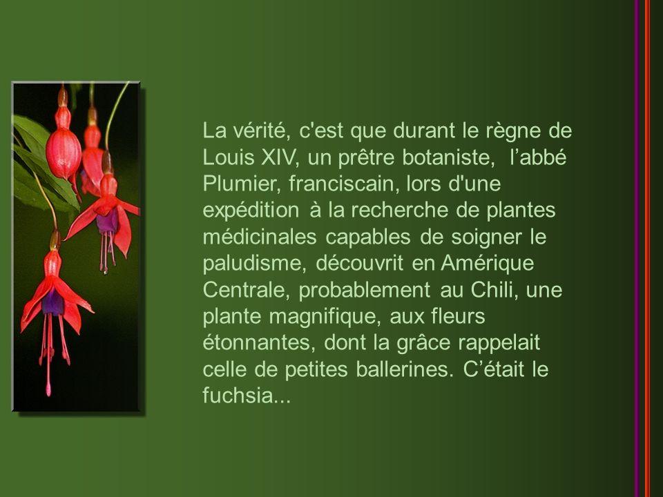 La vérité, c est que durant le règne de Louis XIV, un prêtre botaniste, l'abbé Plumier, franciscain, lors d une expédition à la recherche de plantes médicinales capables de soigner le paludisme, découvrit en Amérique Centrale, probablement au Chili, une plante magnifique, aux fleurs étonnantes, dont la grâce rappelait celle de petites ballerines.