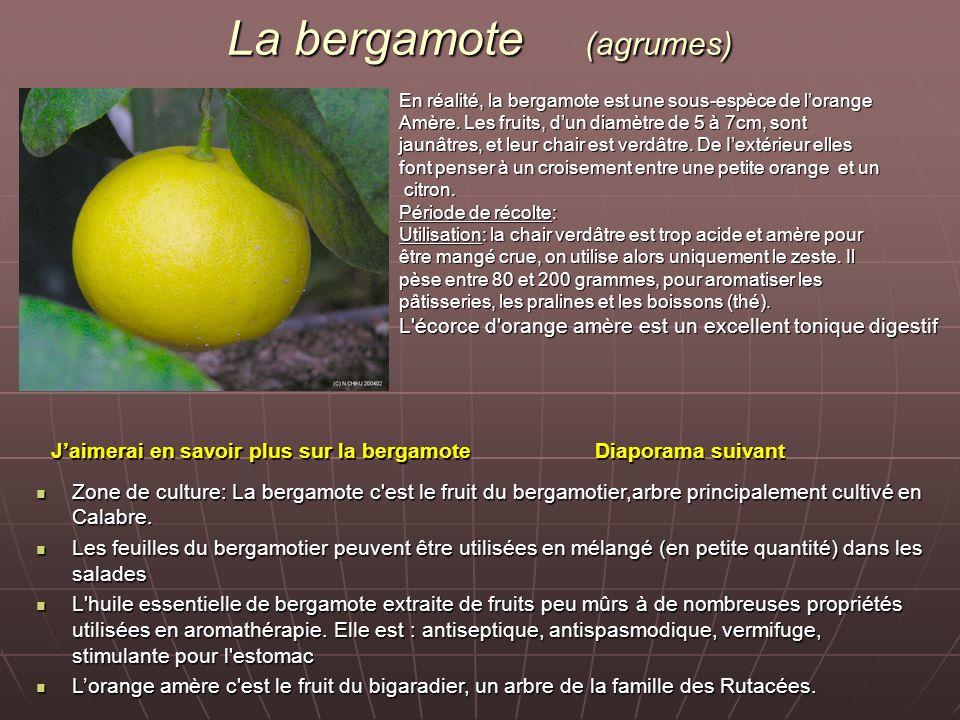 La bergamote (agrumes)