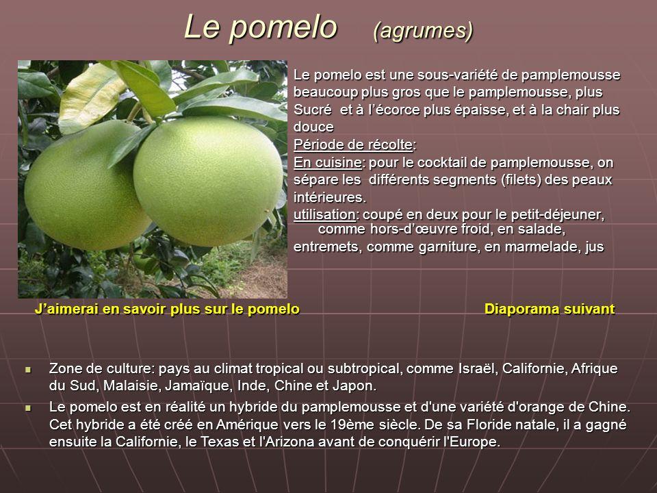 Le pomelo (agrumes) Le pomelo est une sous-variété de pamplemousse