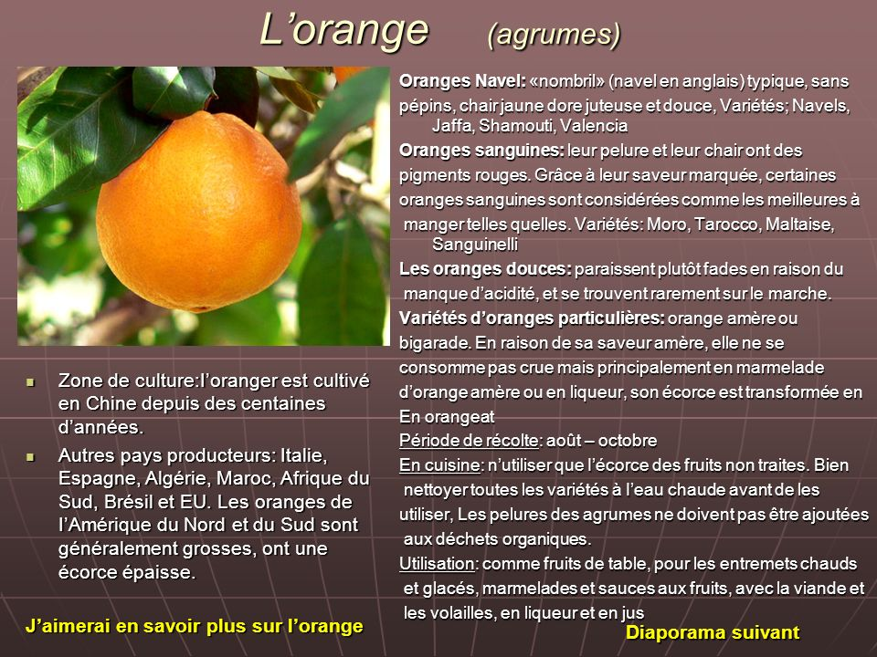 L'orange (agrumes) Oranges Navel: «nombril» (navel en anglais) typique, sans.