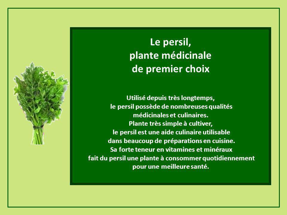 Le persil, plante médicinale de premier choix