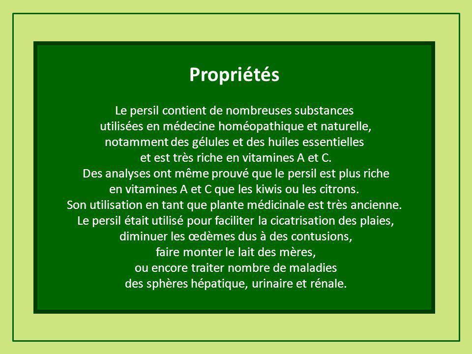 Propriétés Le persil contient de nombreuses substances
