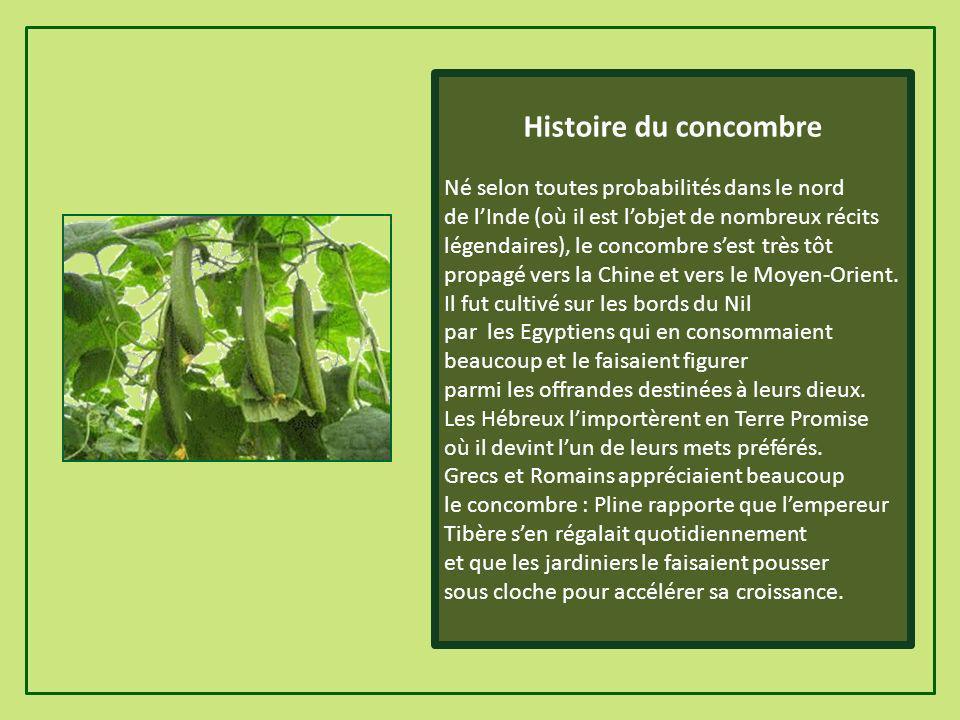 Histoire du concombre Né selon toutes probabilités dans le nord