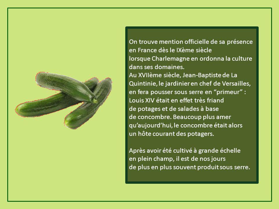 On trouve mention officielle de sa présence en France dès le IXème siècle