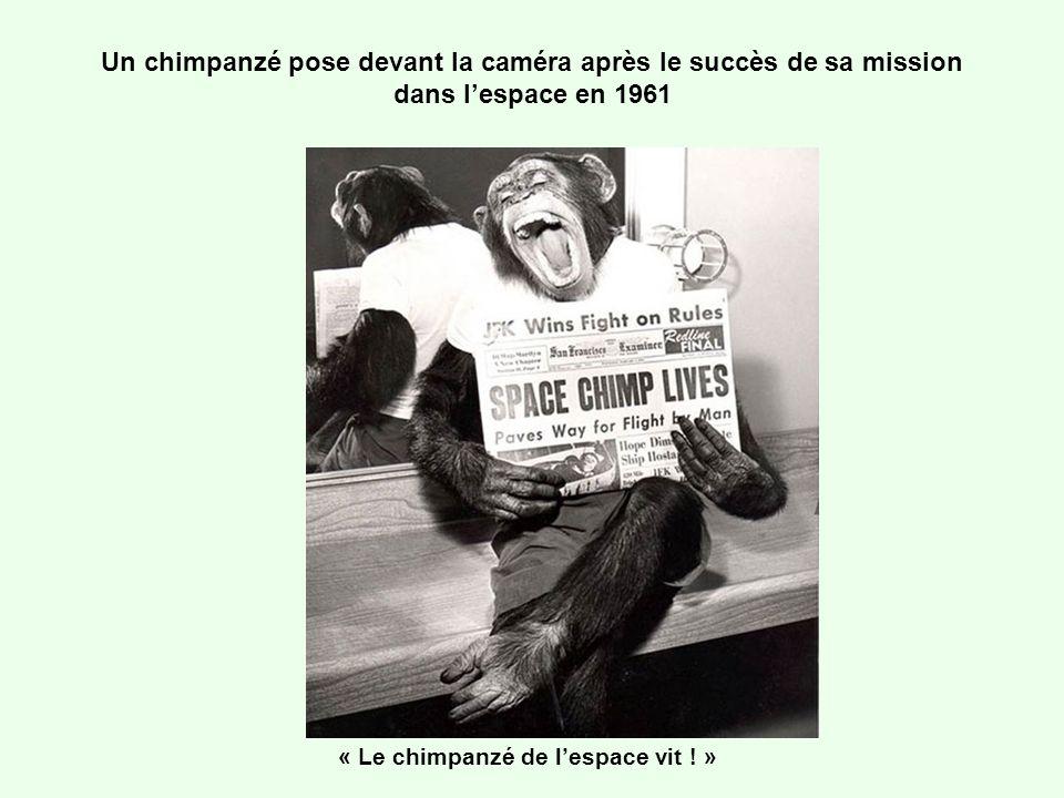 « Le chimpanzé de l'espace vit ! »