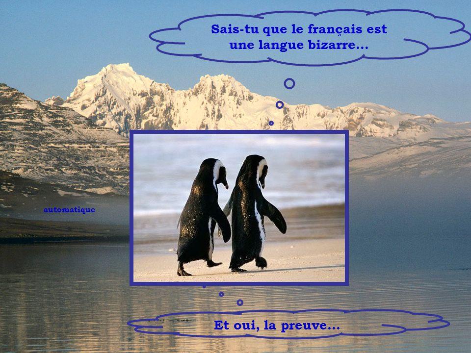 Sais-tu que le français est une langue bizarre…