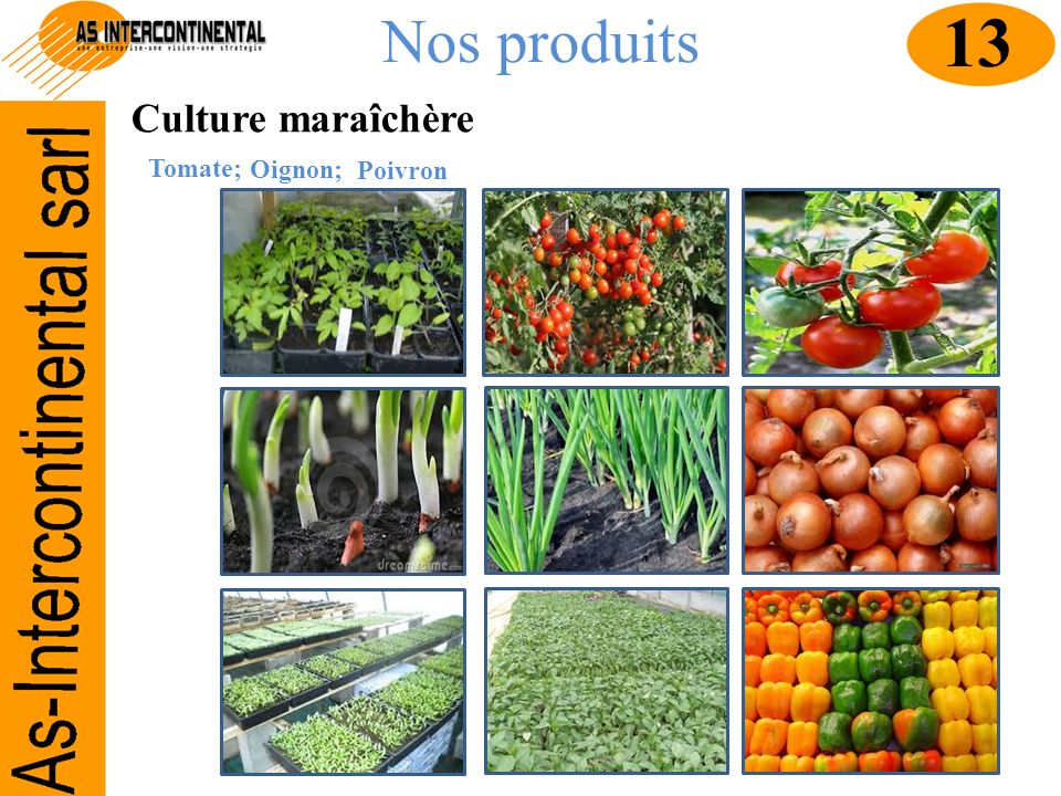 Nos produits 13 Culture maraîchère Tomate; Oignon; Poivron