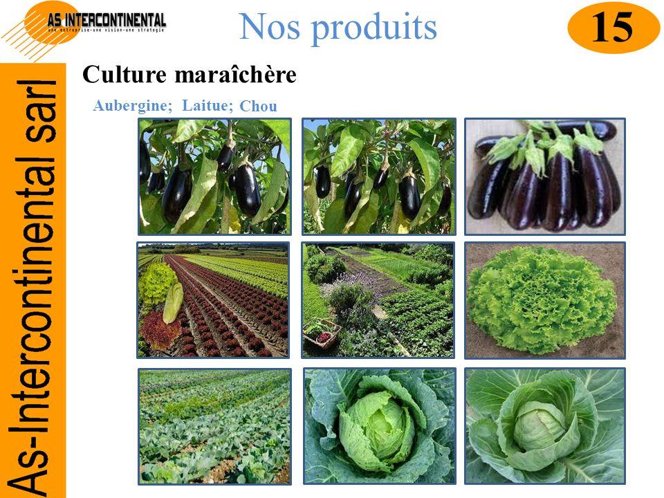 Nos produits 15 Culture maraîchère Aubergine; Laitue; Chou