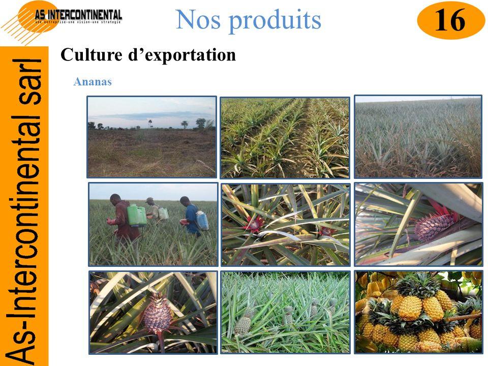 Nos produits 16 Culture d'exportation Ananas