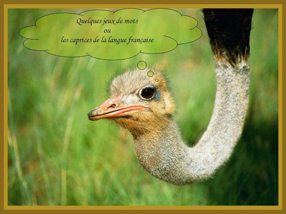 les caprices de la langue française