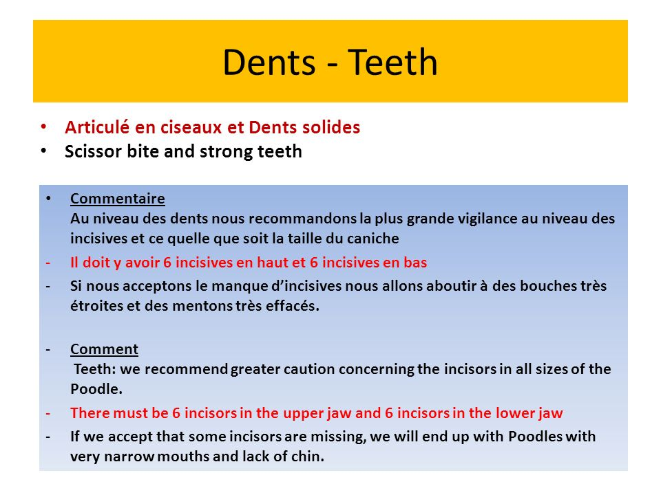 Dents - Teeth Articulé en ciseaux et Dents solides