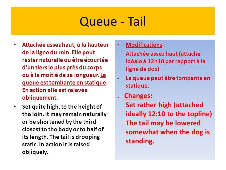 Queue - Tail