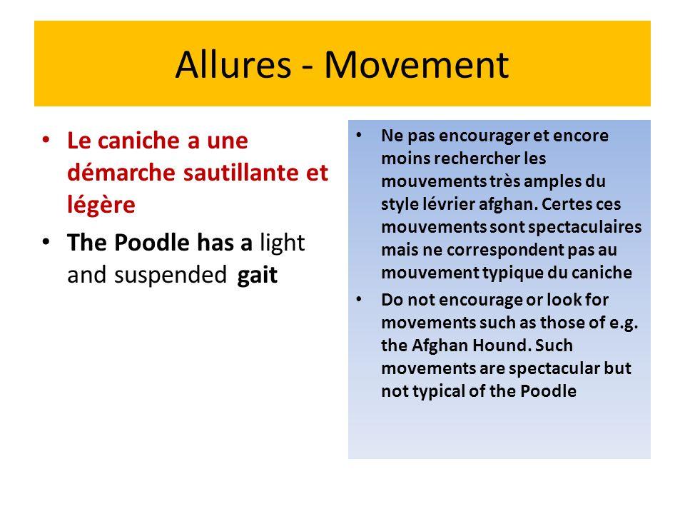 Allures - Movement Le caniche a une démarche sautillante et légère