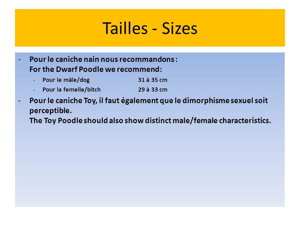 Tailles - Sizes Pour le caniche nain nous recommandons : For the Dwarf Poodle we recommend: Pour le mâle/dog 31 à 35 cm.