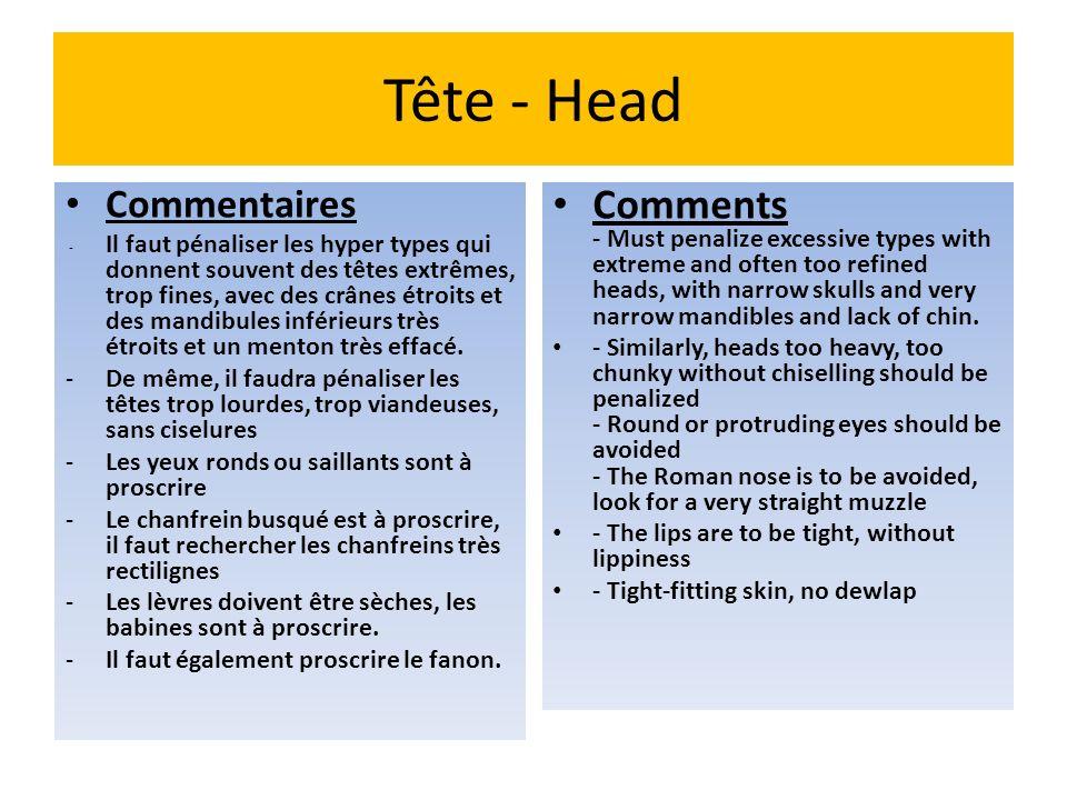 Tête - Head Commentaires.