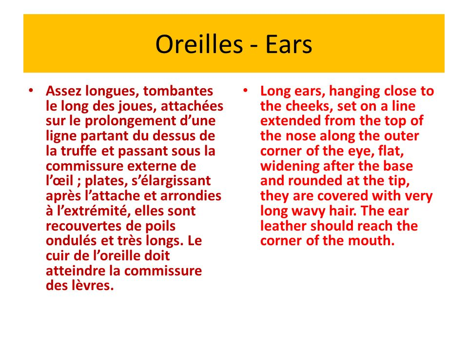 Oreilles - Ears
