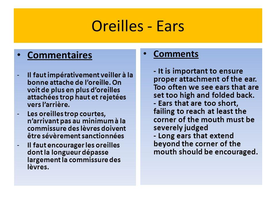 Oreilles - Ears Commentaires