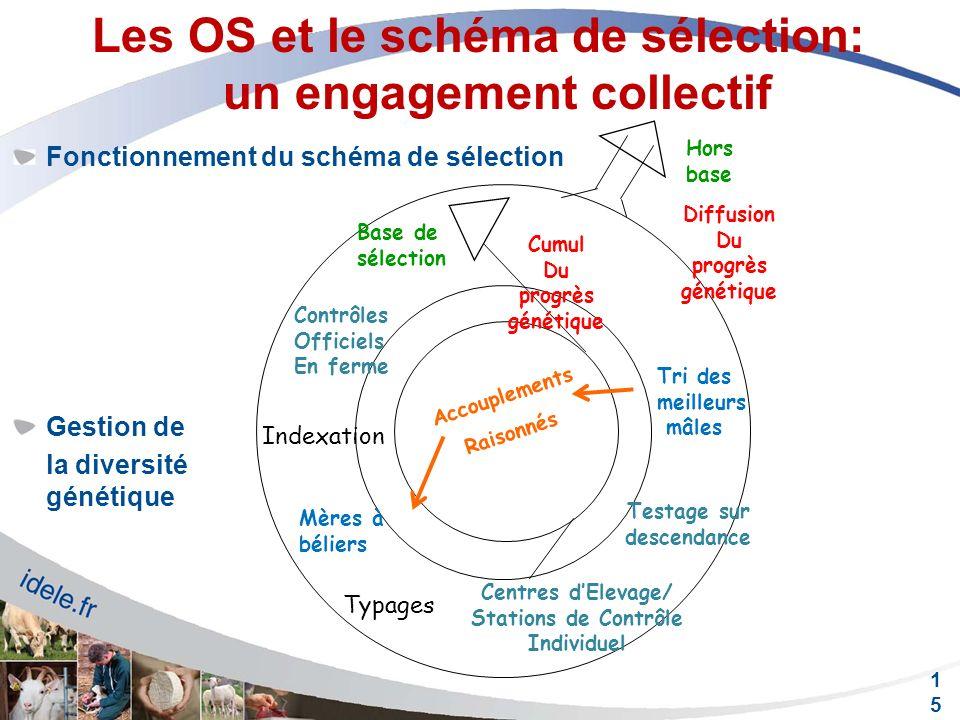 Les OS et le schéma de sélection: un engagement collectif