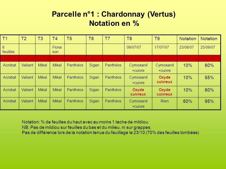 Parcelle n°1 : Chardonnay (Vertus)
