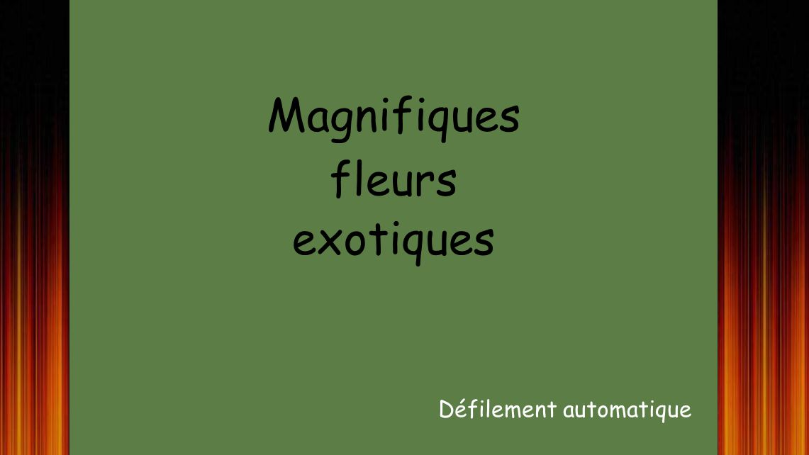 Magnifiques fleurs exotiques Défilement automatique