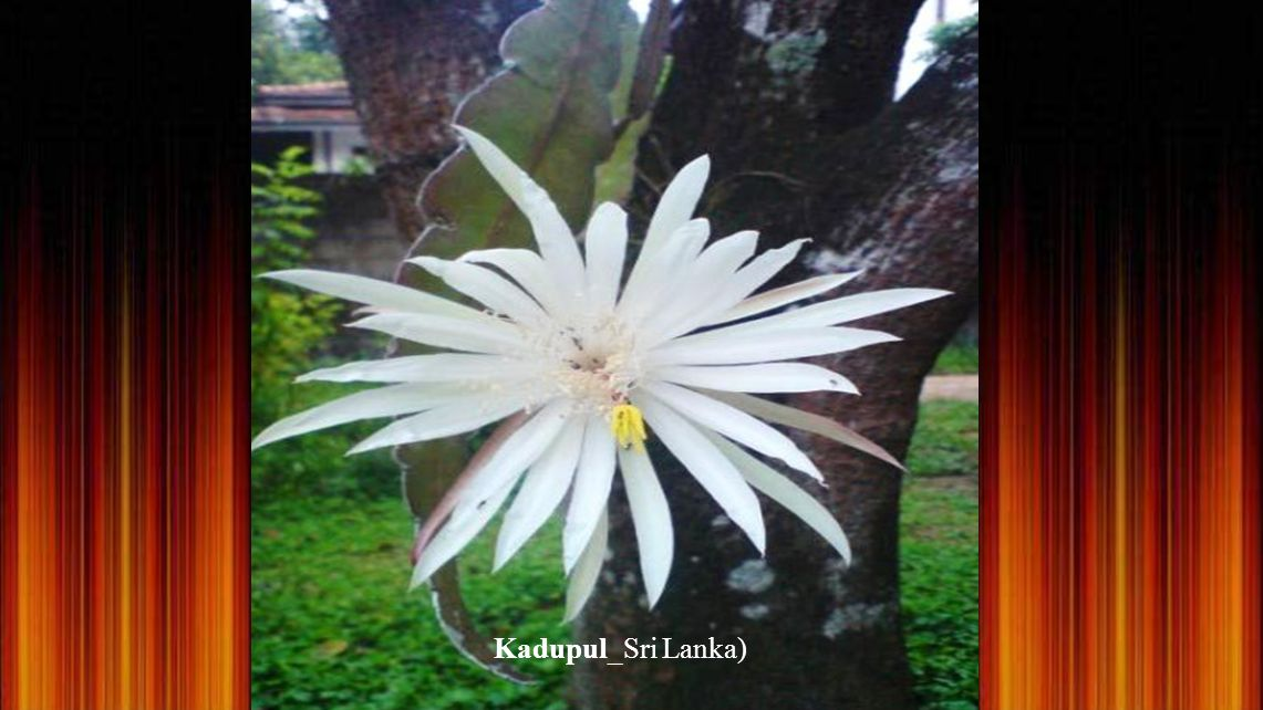 Kadupul_Sri Lanka)
