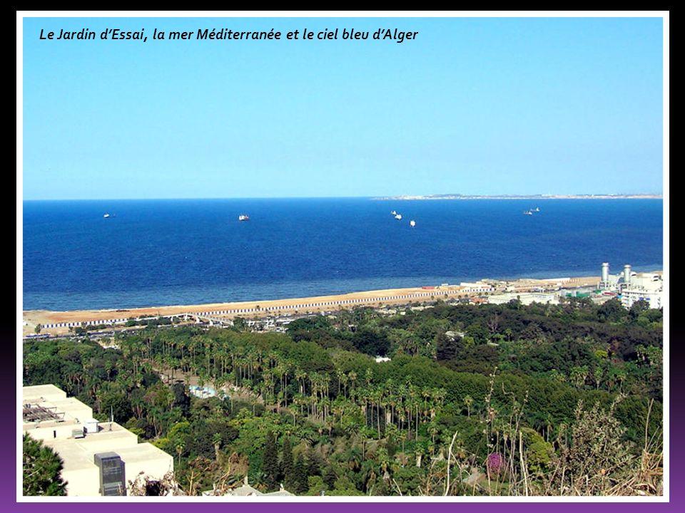 Le Jardin d'Essai, la mer Méditerranée et le ciel bleu d'Alger