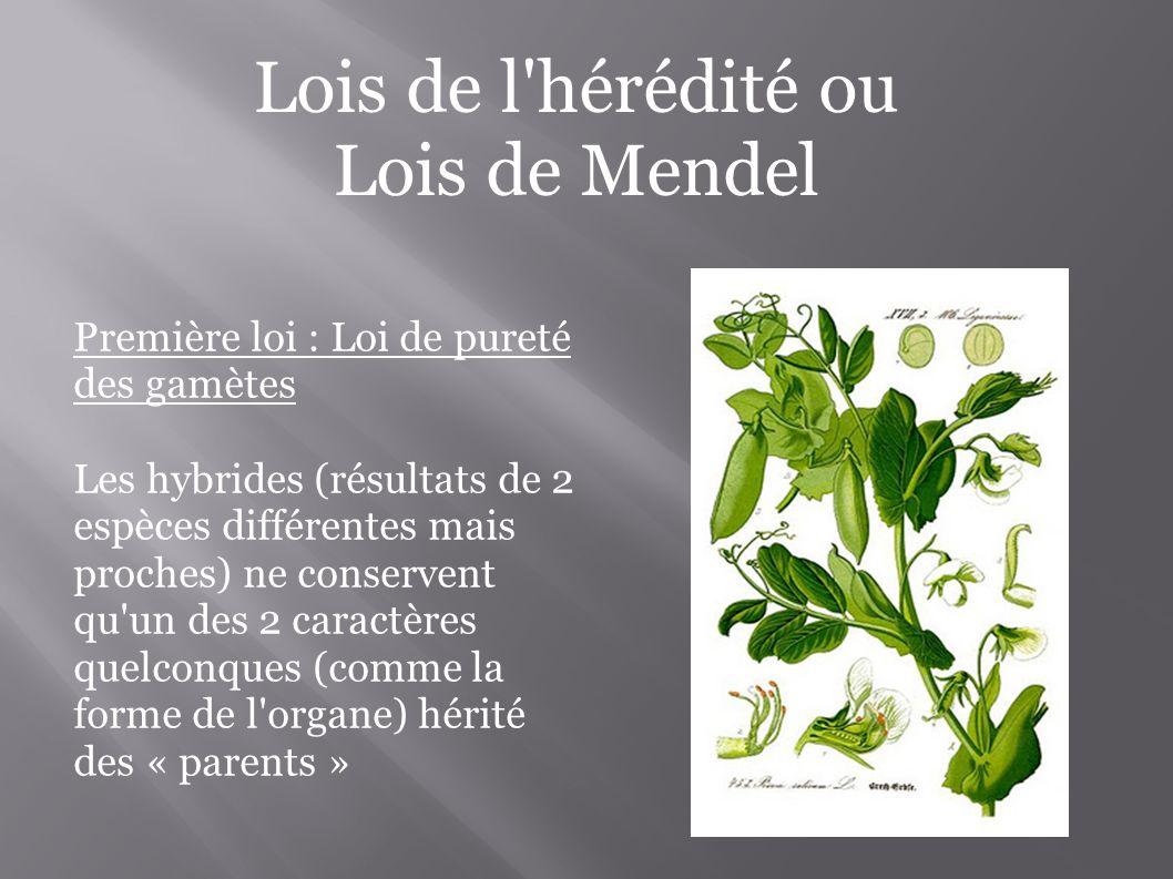 Lois de l hérédité ou Lois de Mendel