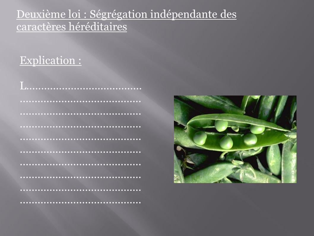 Deuxième loi : Ségrégation indépendante des caractères héréditaires