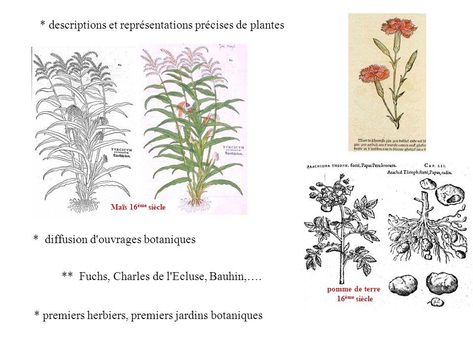 * descriptions et représentations précises de plantes