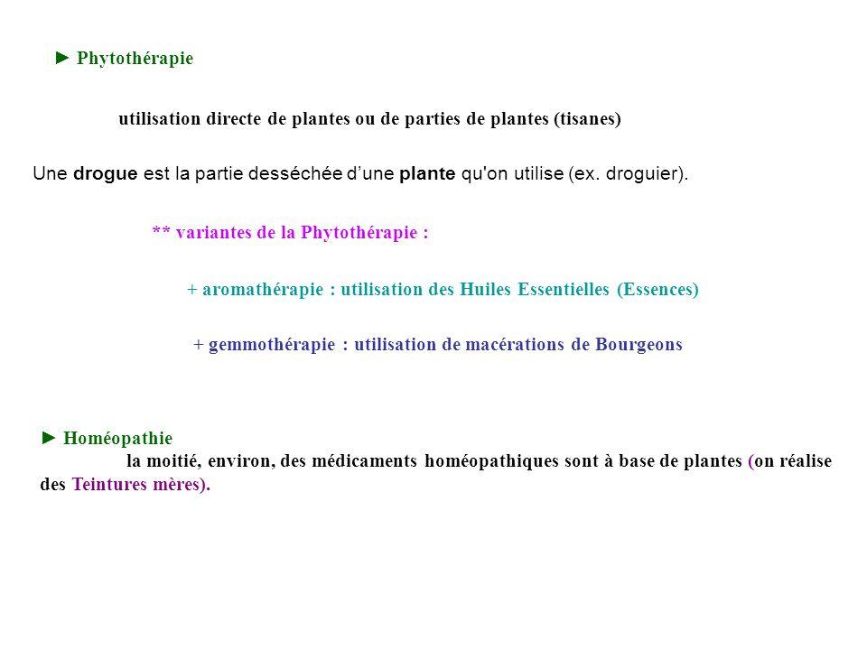 ► Phytothérapie utilisation directe de plantes ou de parties de plantes (tisanes)