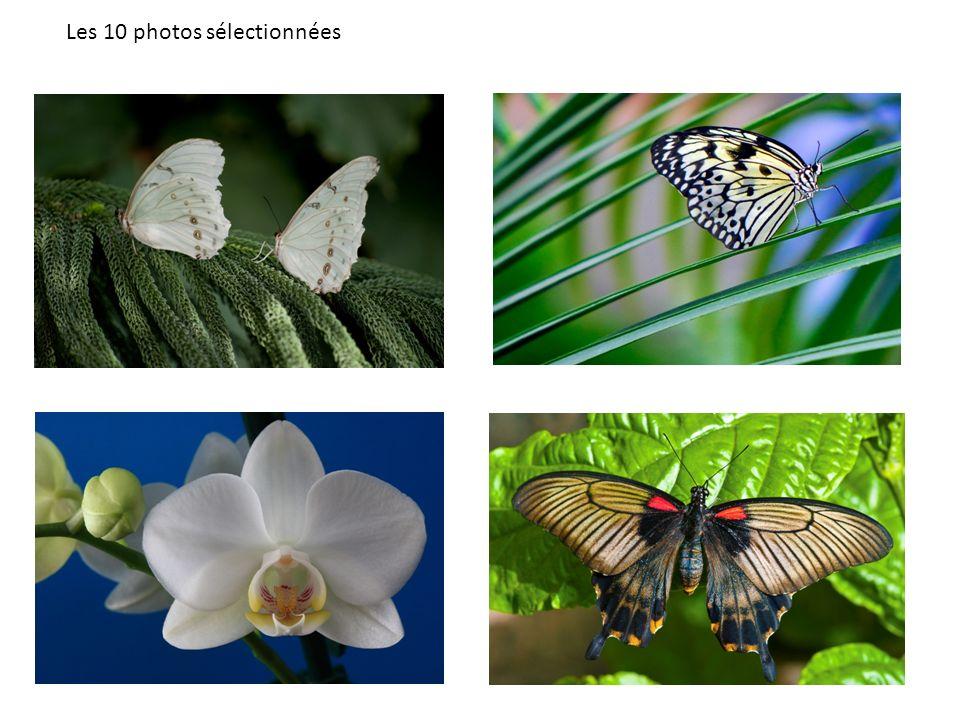 Les 10 photos sélectionnées
