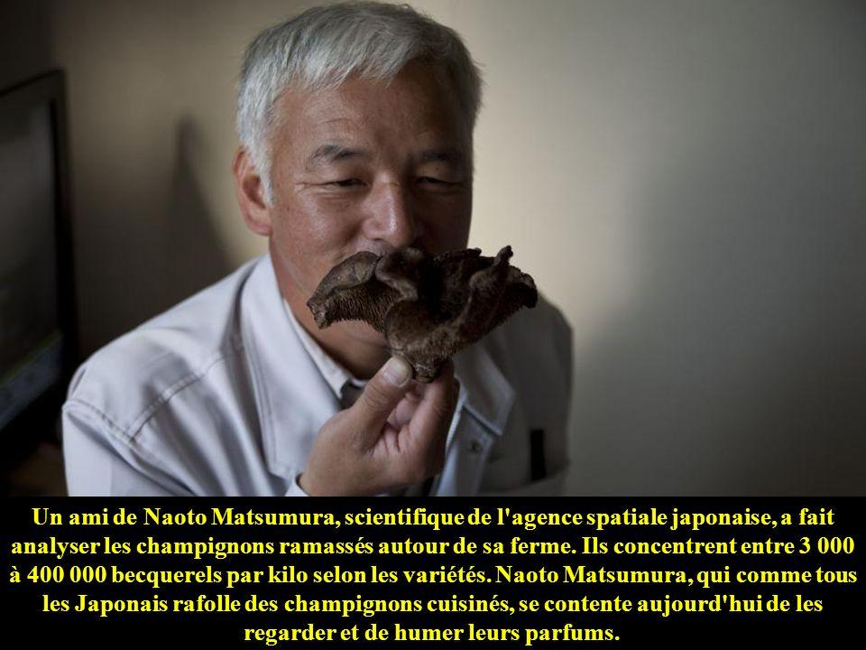 Un ami de Naoto Matsumura, scientifique de l agence spatiale japonaise, a fait analyser les champignons ramassés autour de sa ferme.