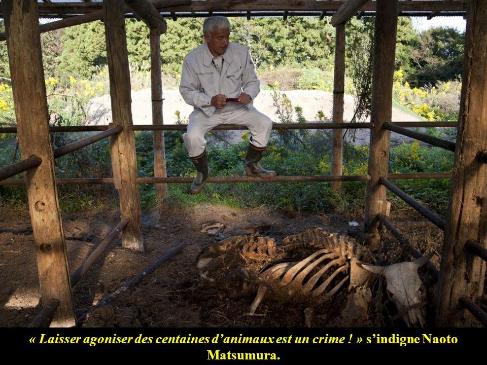 « Laisser agoniser des centaines d'animaux est un crime