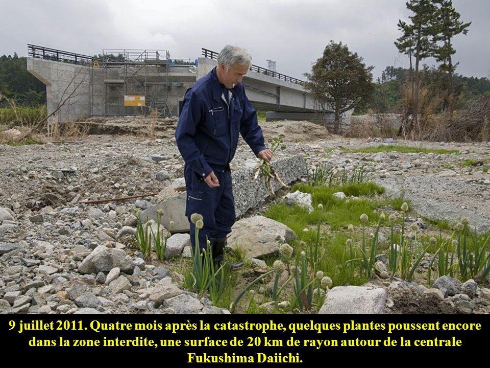 9 juillet 2011. Quatre mois après la catastrophe, quelques plantes poussent encore dans la zone interdite, une surface de 20 km de rayon autour de la centrale Fukushima Daiichi.