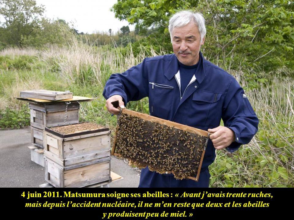 4 juin 2011. Matsumura soigne ses abeilles : « Avant j'avais trente ruches, mais depuis l'accident nucléaire, il ne m'en reste que deux et les abeilles y produisent peu de miel. »