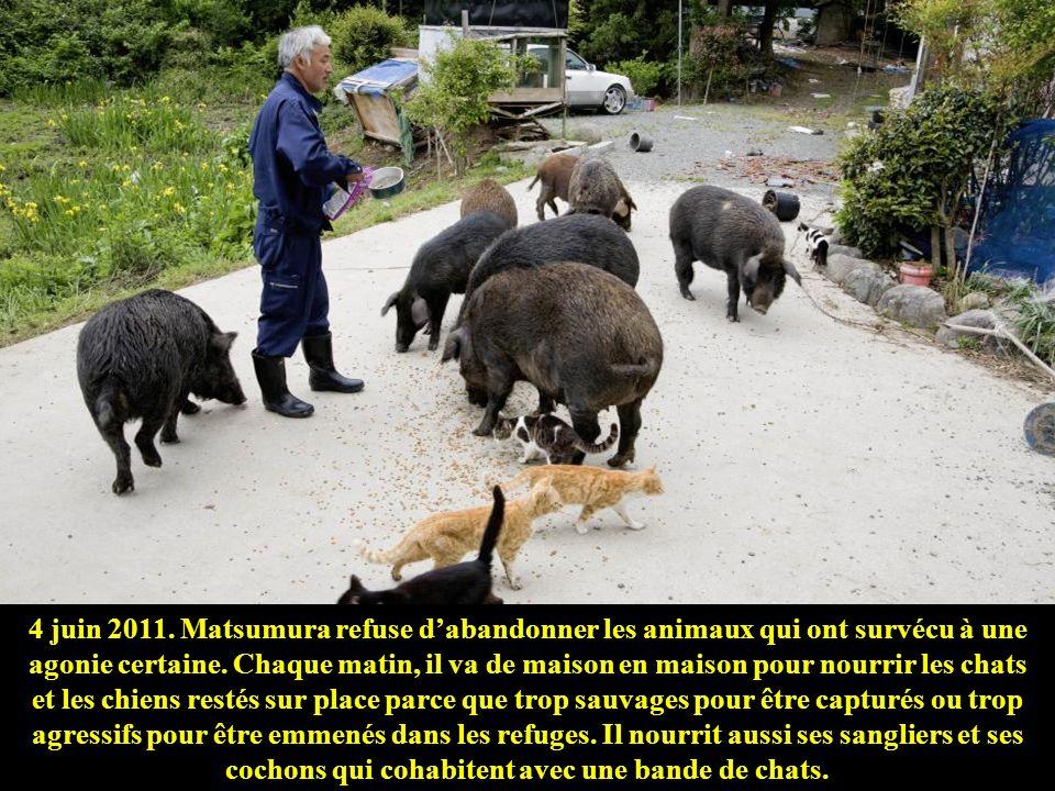4 juin 2011. Matsumura refuse d'abandonner les animaux qui ont survécu à une agonie certaine.