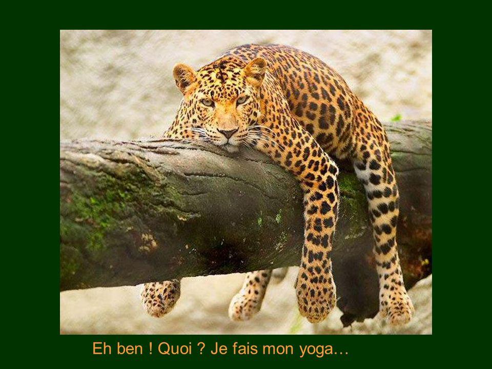 Eh ben ! Quoi Je fais mon yoga…