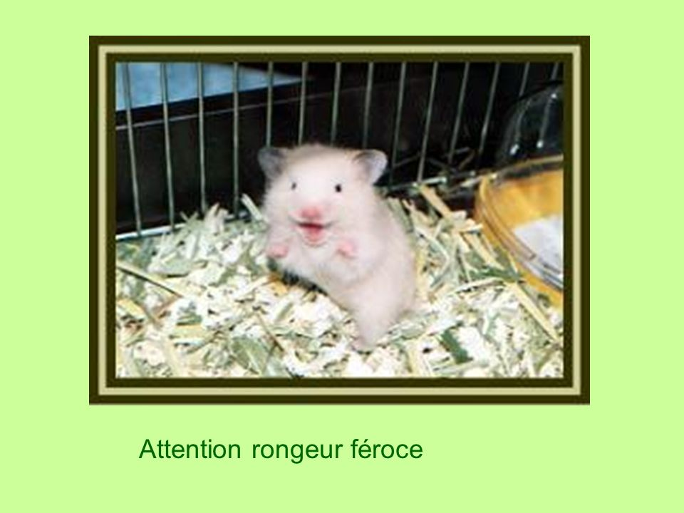 Attention rongeur féroce
