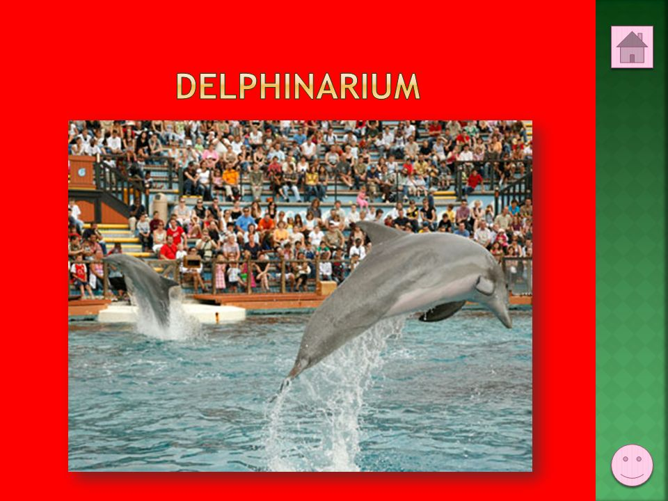 DELPHINARIUM