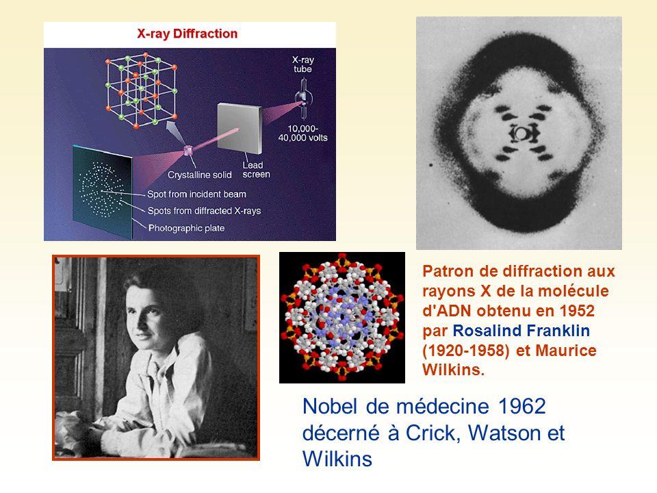 Nobel de médecine 1962 décerné à Crick, Watson et Wilkins