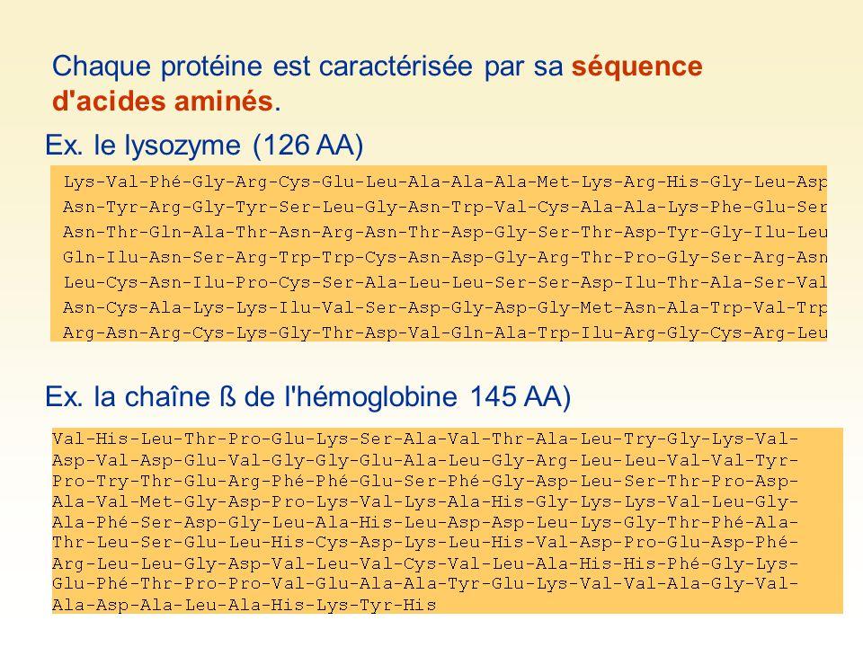 Chaque protéine est caractérisée par sa séquence d acides aminés.